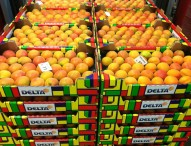 Morder la manzana, nuevo 'desafío' en los '100 Estadios'
