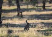 Comienza el periodo para la caza del conejo