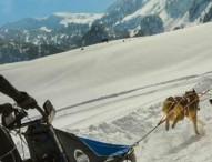 El bienestar del perro, clave del éxito en el deporte de trineo