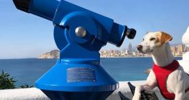 Un perro 'influencer' recorrió 22 mil kilómetros promoviendo el turismo en España