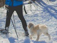 Skijoring, una nueva forma de hacer deporte con tu perro